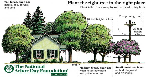 http://www.arborday.org/trees/righttreeandplace/index.cfm